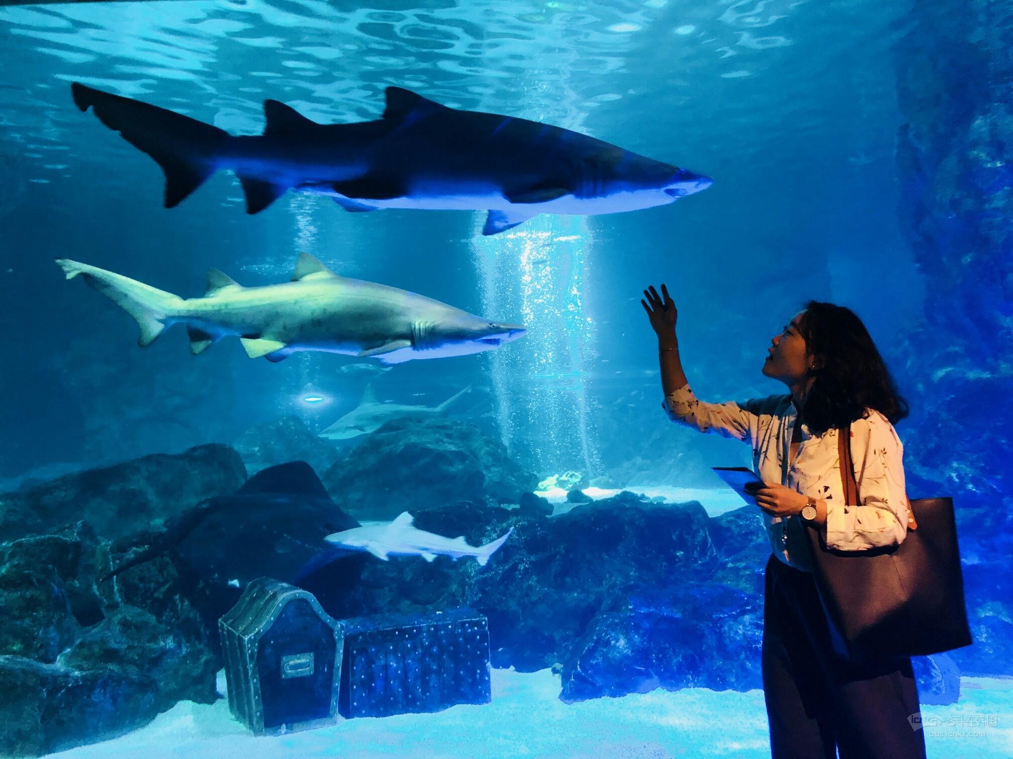 壁纸 海底 海底世界 海洋馆 水族馆 2016_1512