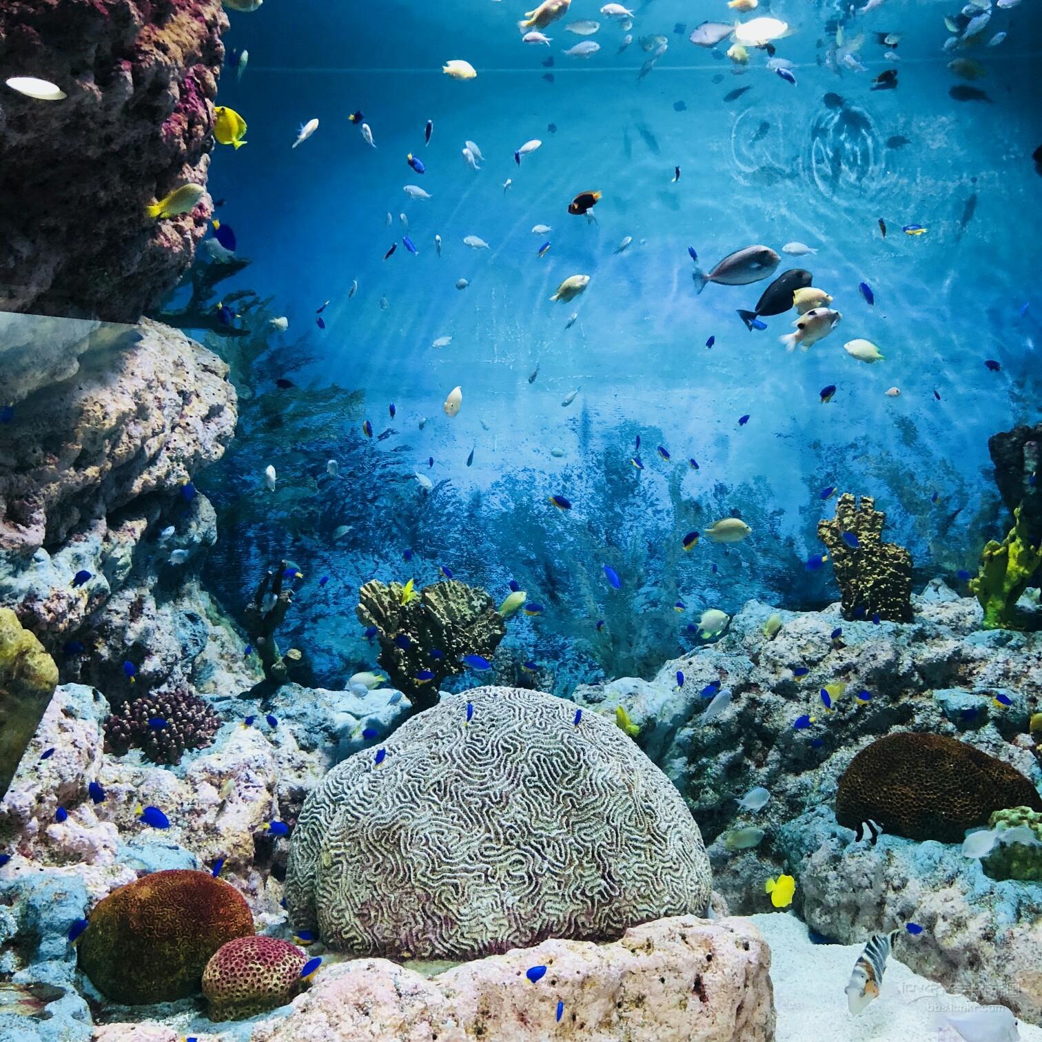 壁纸 海底 海底世界 海洋馆 水族馆 桌面 1512_1512