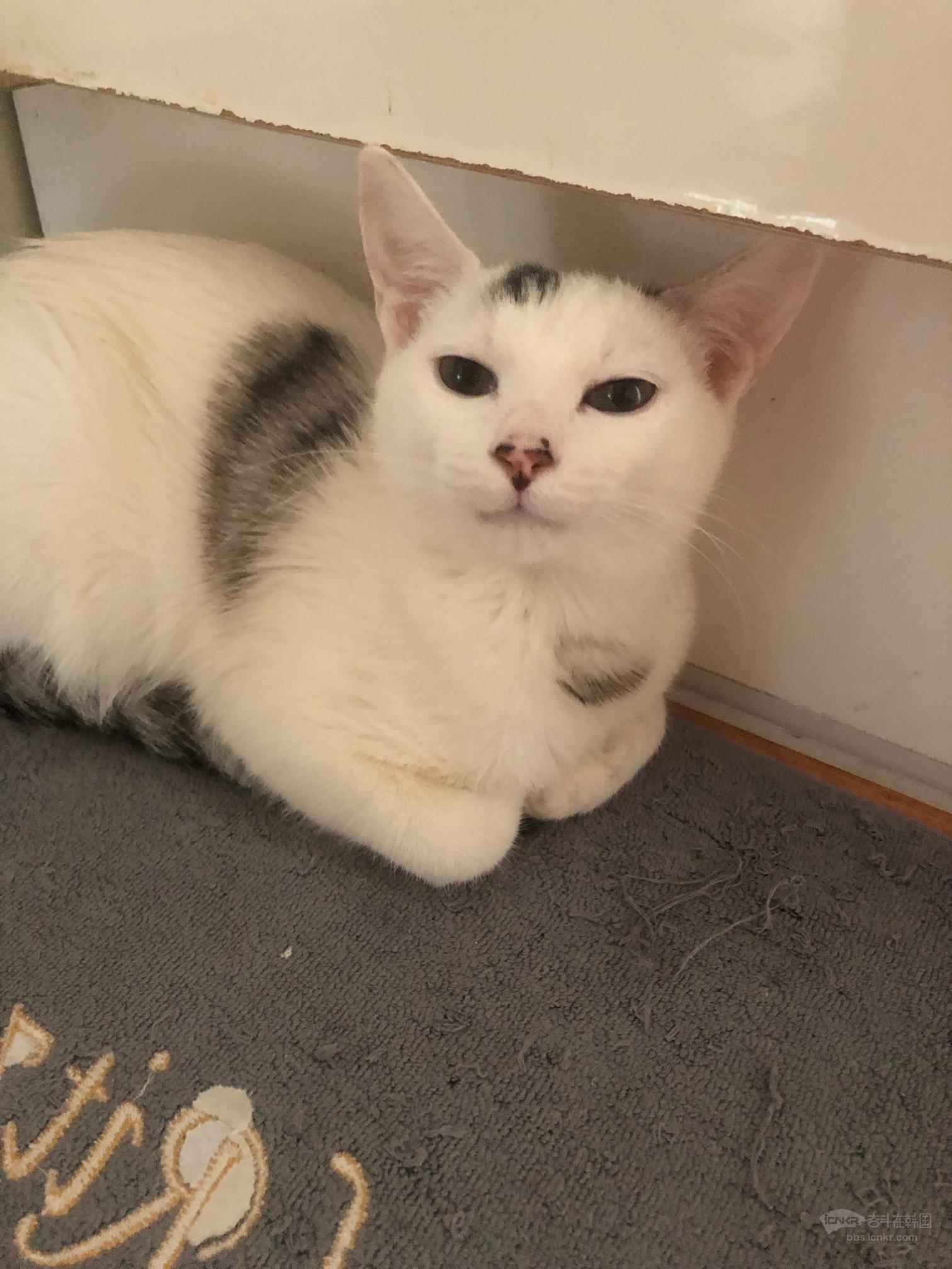 帮朋友卖一只白猫-宠物花草生活坊 奋斗在韩国 韩国生